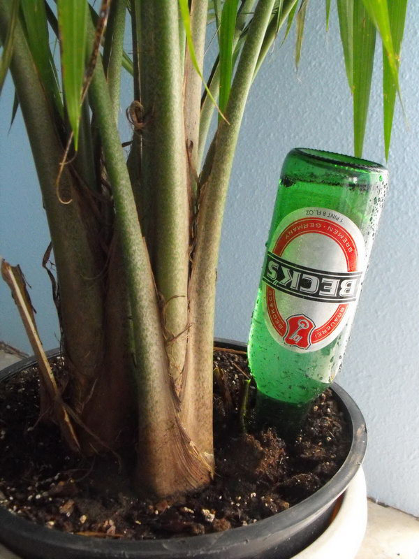Use This Easy Bottle Craft to Keep Your Plants Alive While On Vacation