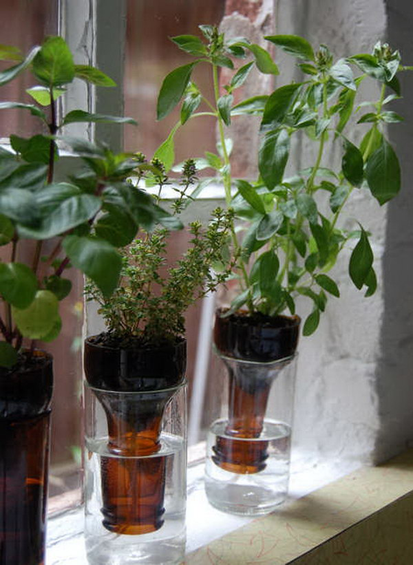 DIY Bottle Garden