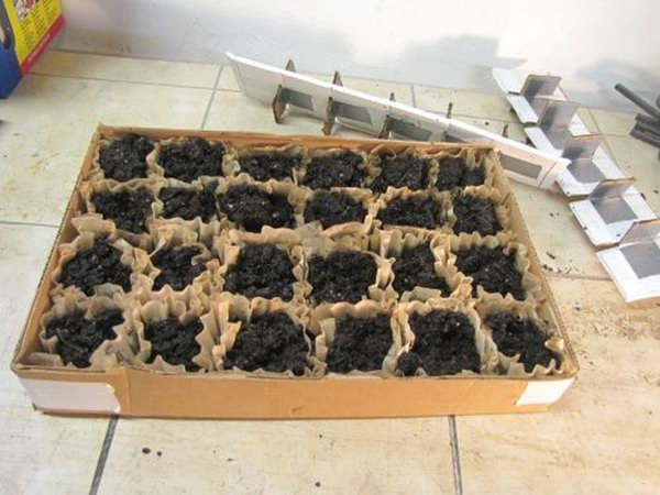 Coffee Filter Seedling Starter Tray