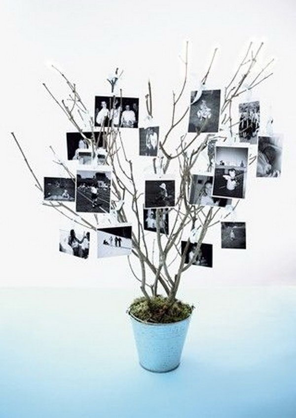 Rustic Photo Tree Display.
