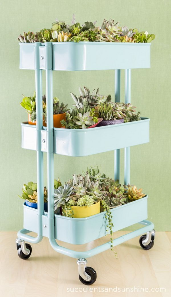 Succulent Garden in an IKEA Bar Cart.