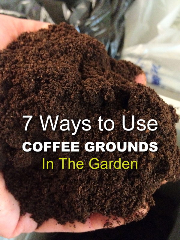 Use Coffee Grounds in Your Garden.