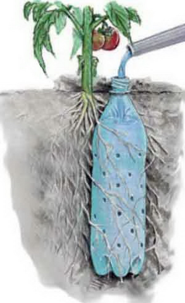 Soda Bottle Drip Feeder for Garden Plants.