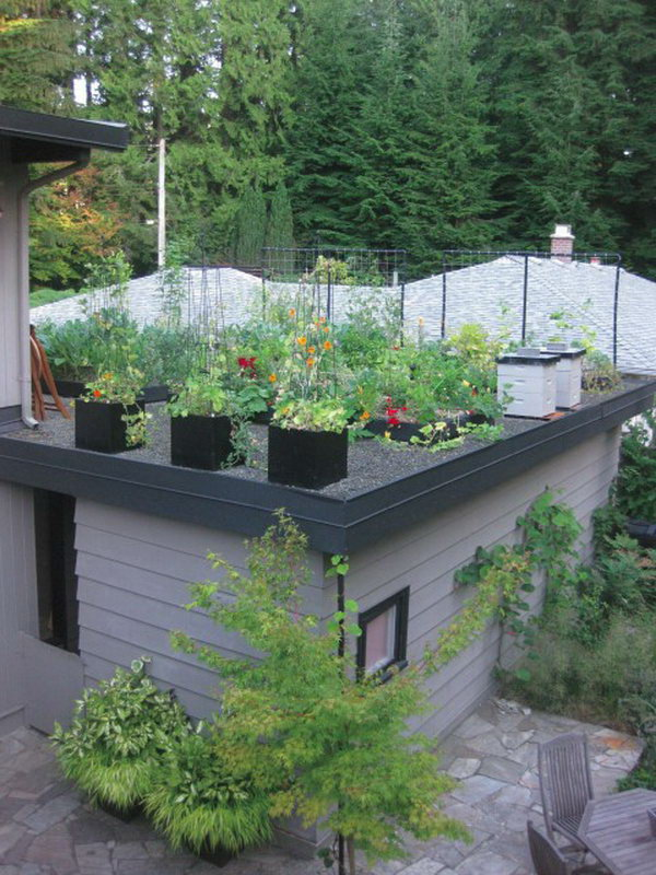 Creating an Edible Green Roof on a Garage